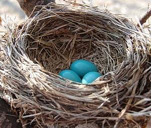 Nest of the Nuturing Nanny